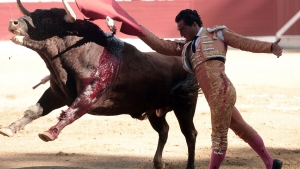 Spanish matador Ivan Fandino performs a pass with a Baltasar Iban bull during a bullfight at the Corrida des Fetes on June 17, 2017 in Aire sur Adour, southwestern France. Spanish matador Ivan Fandino died after being impaled by a Baltasar Iban bull during a bullfight in Aire sur Adour, southwestern France, during the Corrida des Fetes. IROZ GAIZKA / AFP